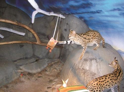 Staten Island Zoo Animal List
